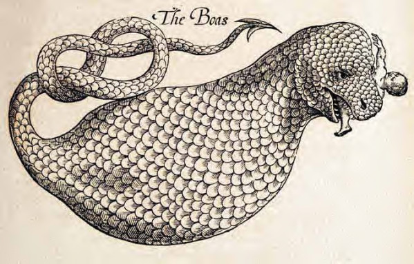 History of Four-Footed Beasts and Serpents 1658 Boa